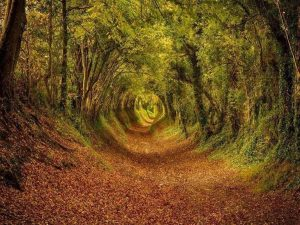 Ashdown-Forest-100-acre-wood
