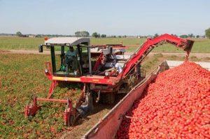 Tomato-Harvester