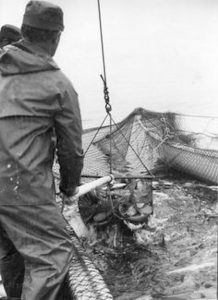 cod_fishing_Newfoundland
