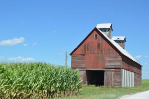 Cornfield_in_the_Midwest