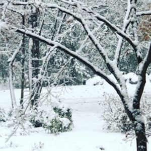 Virginia_snowstorm
