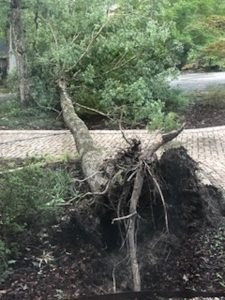 downed_tree
