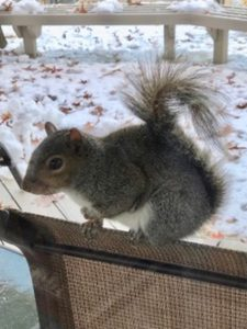 squirrel_seeks_shelter_from_snow